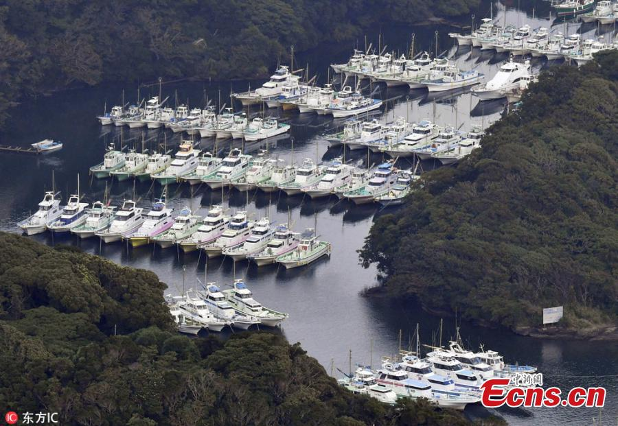 An aerial photo shows fishing boats and other ships park at Aburatsubo Port that is designated as an evaluation place as the typhoon Jebi approaches in Miura City, Kanagawa Prefecture, Japan, Sep.3, 2018. It is the strongest typhoon of 2018 approaching Japan. (Photo/IC)