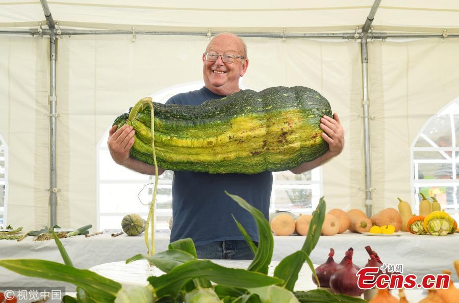 Gordon Lowe, a retired accountant with the massive marrow which he planted and forgot about, after it swelled to an enormous, award-winning three and a half stone. After buying seeds on the Internet Gordon Lowe, 67, planted them in his allotment and forgot about the vegetable. Then after six months of no care or attention, Lowe from Portsmouth, Hants, returned to the allotment to find the marrow had grown to a colossal size. He was especially shocked as it was the first he had ever grown and admitted it \'was basically a mistake.\' (Photo/VCG)
