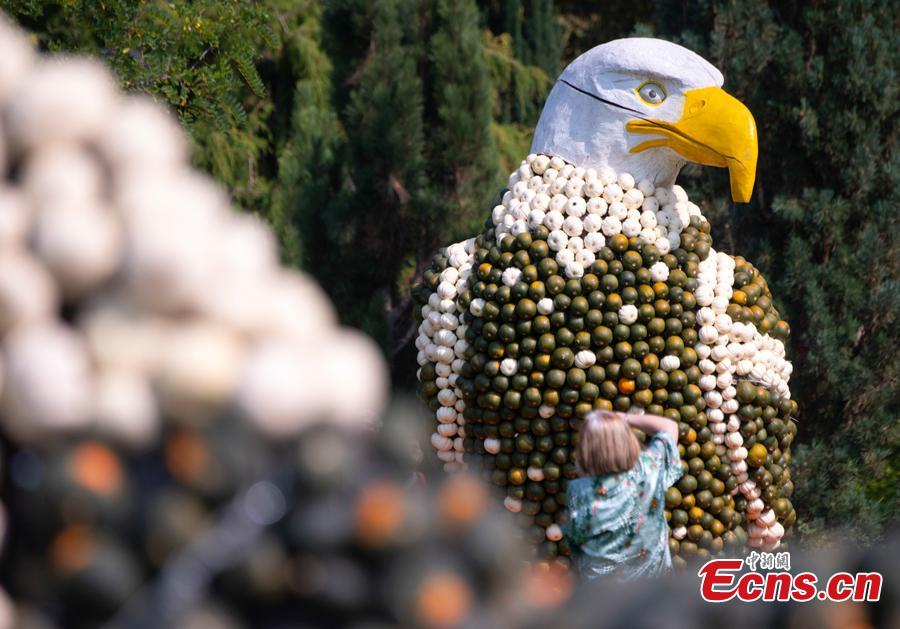 A visitor shoots photos of a sculpture displaying a white head eagles during the autumn exhibition \'Flying\' at the horticultural exhibition \'ega\' (Erfurt Garden Construction Exhibition) in Erfurt, Germany, Wednesday, Sept. 5, 2018. Gardeners created different sculptures with thousands of pumpkins. The exhibition started on Sept. 2, 2018 and last until Oct. 31, 2018.(Photo/Agencies)