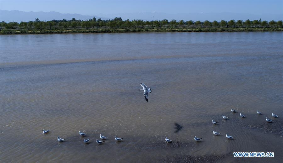 Aerial photo taken on Sept. 7, 2018 shows the scenery of Heihe River wetland in Gaotai County of Zhangye City, northwest China\'s Gansu Province. (Xinhua/Tao Ming)