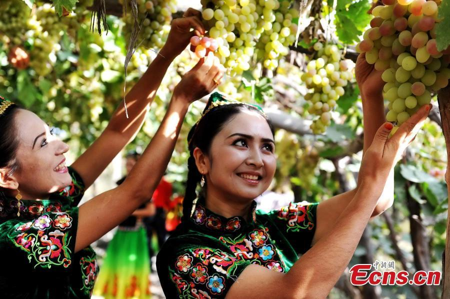 Eating grapes   The White Dew season is just the time when grapes become widely available for sale. Eating grapes in autumn can help dispel one\'s internal heat and expel toxins.