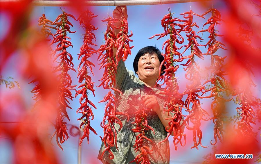 A farmer dries red pepper in Dongcun Village, Zibo City of east China\'s Shandong Province, Sept. 11, 2018. (Xinhua/Zhao Dongshan)