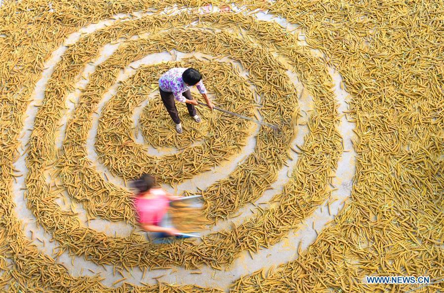 Farmers dry grain in Dongyuezhuang Village, Zibo City of east China\'s Shandong Province, Sept. 10, 2018. (Xinhua/Zhao Dongshan)