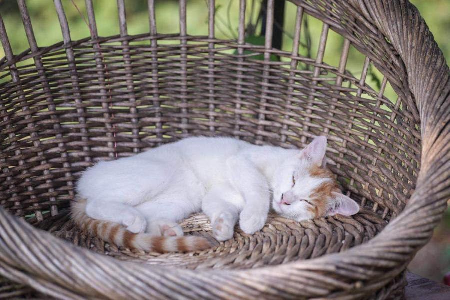 A cat sleeps in a basket provided by the cat lovers in the area. 