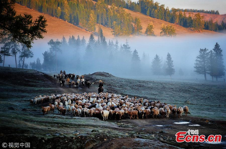 Kazakh nomads herd sheep and cattle to an autumn pasture during a seasonal livestock migration in Altay, Northwest China's Xinjiang Uyghur Autonomous Region, Sept. 11, 2018. Every season, nomadic shepherds move their livestock to different pastures, a tradition that also offers a magnificent spectacle to outsiders. (Photo/VCG)