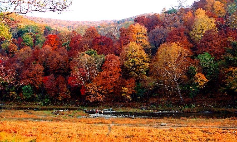 With the autumn already underway, tourists can enjoy the unique fragrance of red leaves at the Red Leaves Valley in Jiaohe city, Northeast China\'s Jilin Province. The valley, located at the west foot of Changbai Mountain, is filled with plentiful trees, such as maple, birch, larch and gingko trees. The leaves will gradually turn from a cardinal red into a gorgeous gold in the autumn. The mix of red and golden colors makes the valley look like massive waves rolling across a great sea. (Photo provided to chinadaily.com.cn)