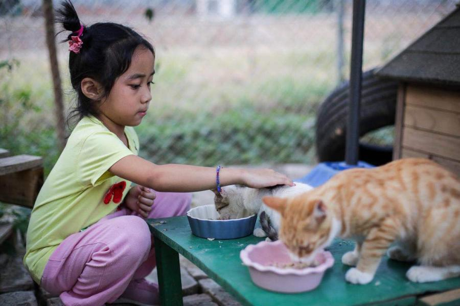 Some young students along with their parents also join the cat lovers\' team to care for the cats together. (Photo by Tang Tao for chinadaily.com.cn)