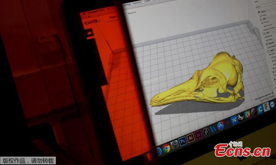 A computer screen shows a penguin cranium piece of the National Museum collection in Rio de Janeiro, Brazil, Sept. 5, 2018. About 300 pieces of the Brazil\'s National Museum that were scanned and some printed in 3D could help to rebuild part of the heritage lost in the fire this weekend. Since 2000, researchers at the PUC worked together with the museum, scanning and printing some of the most important objects of the institution. (Photo/Agencies)