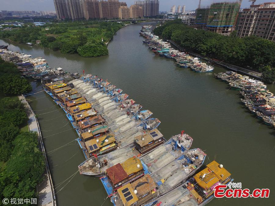 Fishing boats are anchored at a port in preparation for Typhoon Mangkut in Zhongshan City, South China's Guangdong Province, Sept. 13, 2018. The typhoon is expected to bring strong winds and rain as it lands over the weekend. (Photo/VCG)