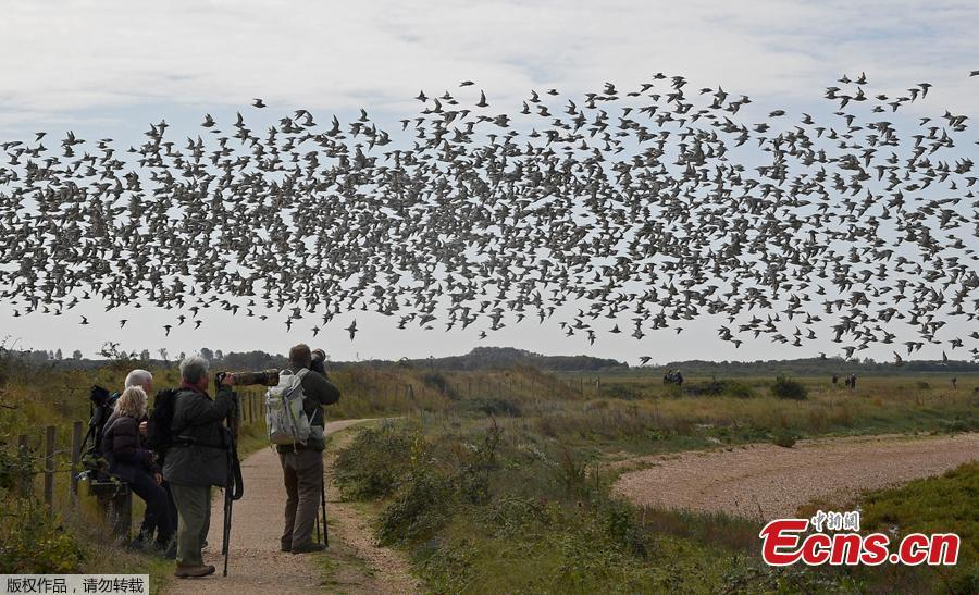 Birdwatchers view as thousands of wading birds move between the sea and dry sandbanks during the month\'s highest tides at The Wash estuary, near Snettisham in Norfolk, Britain, September 13, 2018. (Photo/Agencies)