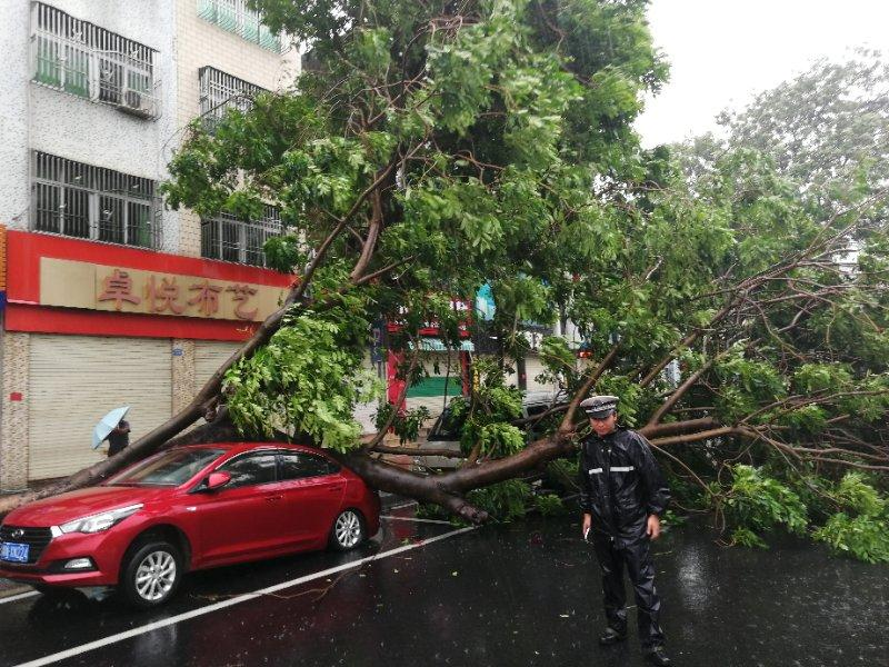A policeman stands beside downed trees in Shanwei, South China\'s Guangdong Province. (Photo provided to chinadaily.com.cn)