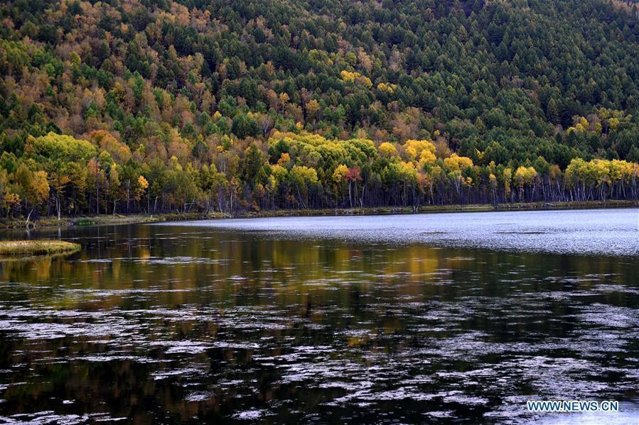 Photo taken on Sept. 14, 2018 shows autumn scenery of the Wusulangzi Lake in Arxan, north China\'s Inner Mongolia Autonomous Region. (Xinhua/Ren Junchuan)