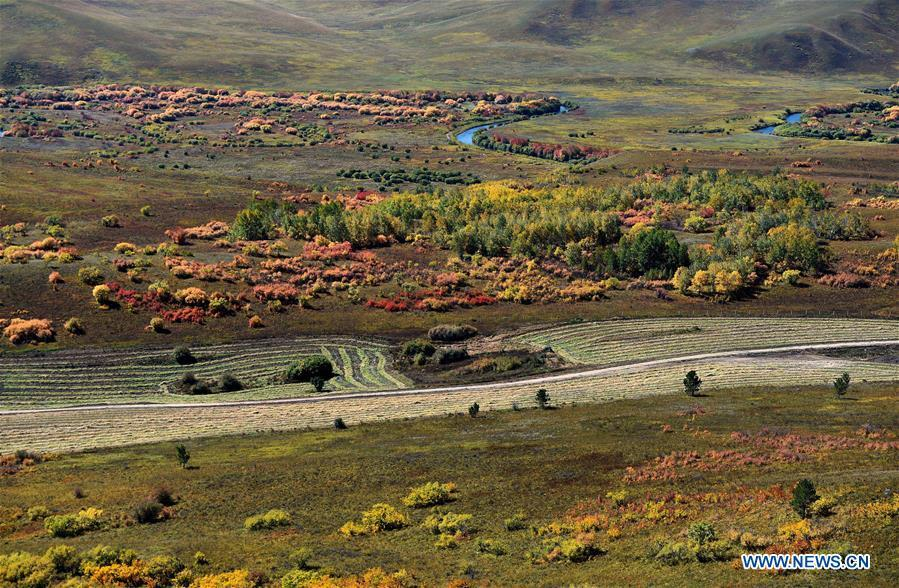 Photo taken on Sept. 15, 2018 shows autumn scenery of forest in Arxan, north China\'s Inner Mongolia Autonomous Region. (Xinhua/Ren Junchuan)