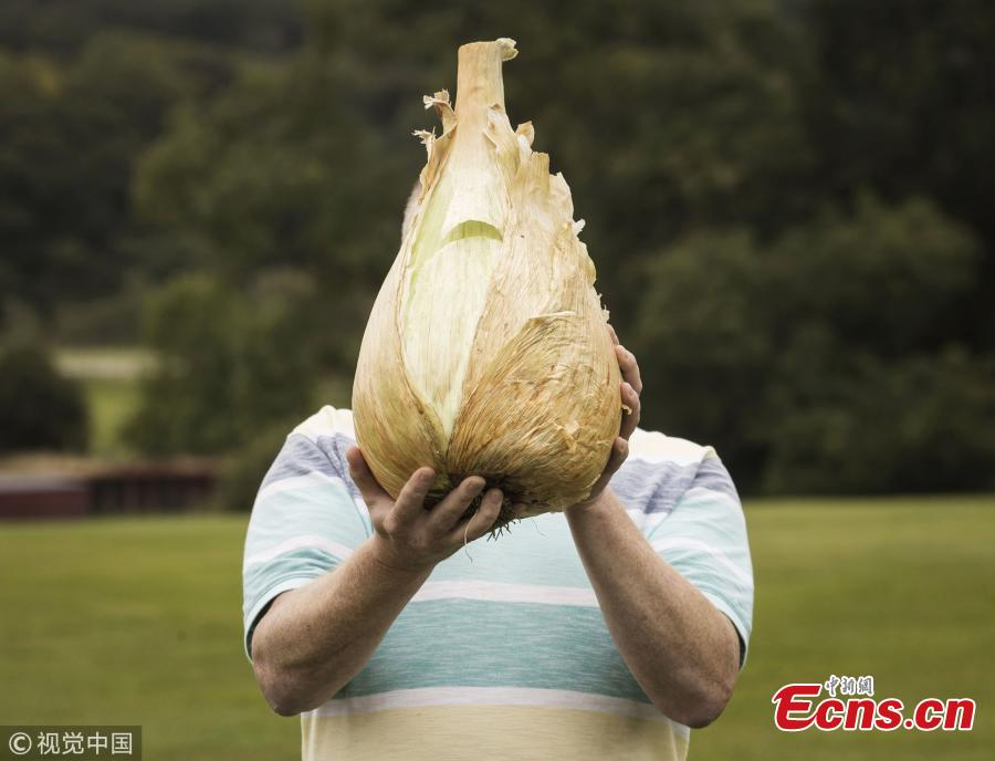 Nick Brake and his heaviest onion, which weighed in at 7.755kg.(Photo/VCG)