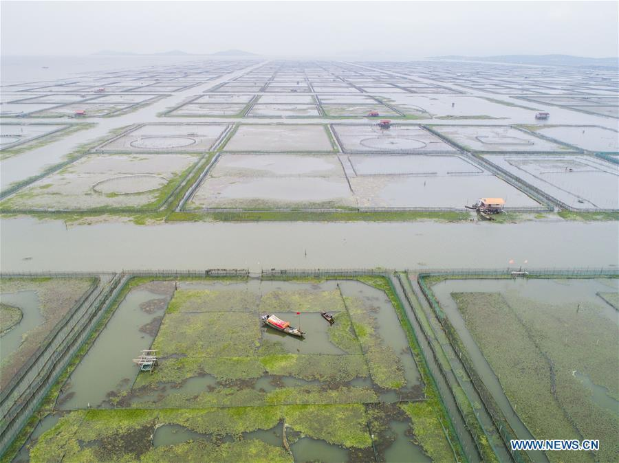 Aerial photo taken on Sept. 16, 2018 shows an aquatic farm of Taihu Lake in Huzhou, east China\'s Zhejiang Province. Local farmers were busy with their work in harvest season of the Taihu Lake crab. The ecological environment of the Taihu Lake was improved due to continuous efforts of local government. (Xinhua/Xu Yu)