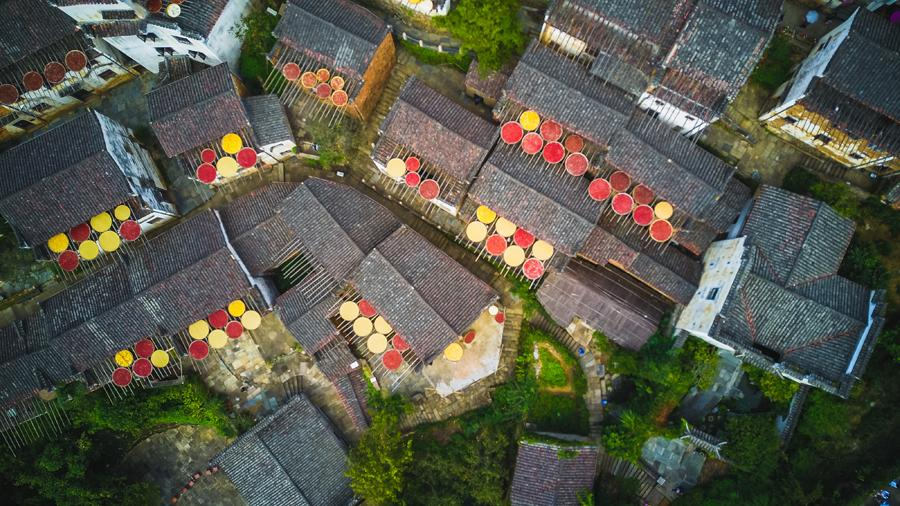Huangling village in Wuyuan county, East China\'s Jiangxi Province, glitters with an autumn harvest glow, Sept. 15, 2018. (Photo/chinadaily.com.cn)  Local residents of Huangling village in Wuyuan county, East China\'s Jiangxi province, fill their bamboo trays with red chilis, chrysanthemum, corn and tea for air drying and winter storage. This ancient agricultural custom incidentally creates a beautiful scene.