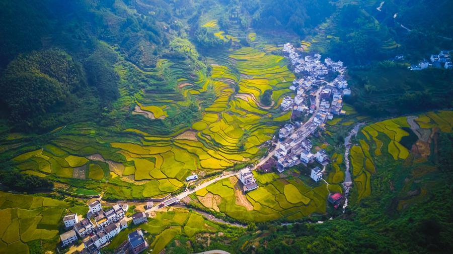 Aerial view of the rice fields in Huangling village in Wuyuan county, East China\'s Jiangxi Province, Sept. 15, 2018. (Photo/chinadaily.com.cn)