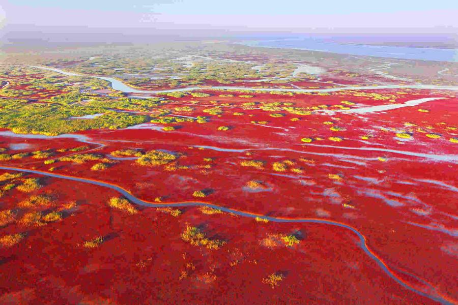 Over 55 percent of the Yellow River estuary area is covered by vegetation. (Photo provided to chinadaily.com.cn)