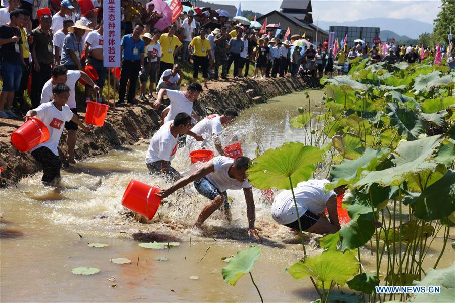 Farmers compete with each other to catch fish with bare hands in Nanfeng County, east China\'s Jiangxi Province, Sept. 19, 2018. Activities to celebrate China\'s first Farmers\' Harvest Festival were held at Modern Agricultural Demonstration Garden in Nanfeng County. (Xinhua/Song Zhenping)