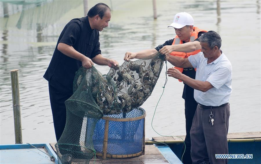 Fishermen catch Chinese mitten crabs during a tourist festival held ashore the Yangcheng Lake in Xiangcheng District of Suzhou, east China\'s Jiangsu Province, Sept. 19, 2018. The Chinese mitten crabs inhabiting Suzhou\'s Yangcheng Lake are a popular cooking ingredient for many food lovers. In the annual event which kicked off here on Wednesday, tourists will be able to have a taste of this year\'s first Chinese mitten crabs ready to serve the table, while the official netting of Yangcheng Lake crabs will begin on Sept. 21. (Xinhua/Hao Qunying)