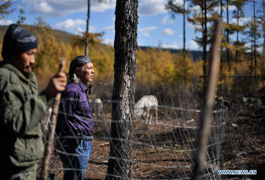 Gu Gejun (R), a vet from Olguya Township, checks the health conditions of reindeer in Yue\'anli Forest Farm of Genhe forestry bureau in the Greater Khingan Mountains of north China\'s Inner Mongolia Autonomous Region, Sept. 18, 2018. Staff members at Yue\'anli Forest Farm are responsible for the conservation and breeding work of reindeer in China. (Xinhua/Yu Yang)