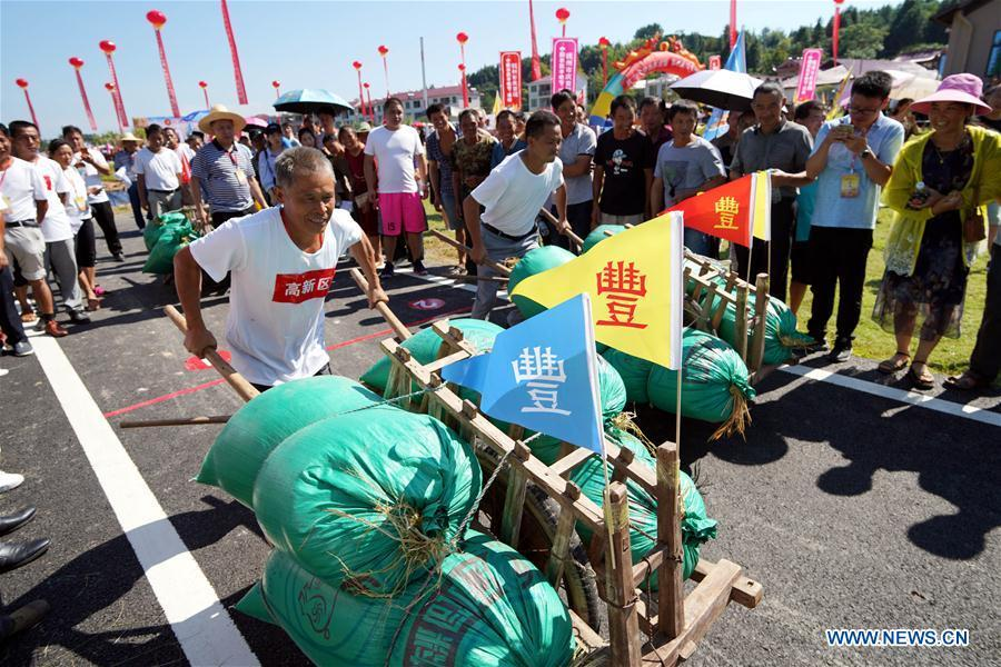 Farmers compete with each other to push wheelbarrows loaded with paddy seeds in Nanfeng County, east China\'s Jiangxi Province, Sept. 19, 2018. Activities to celebrate China\'s first Farmers\' Harvest Festival were held at Modern Agricultural Demonstration Garden in Nanfeng County. (Xinhua/Song Zhenping)