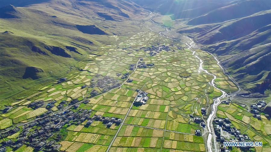 Aerial photo shows highland barley fields in Nagarze Town in Nagarze County of Shannan, southwest China\'s Tibet Autonomous Region, Sept. 13, 2018. The highland barley in Tibet is entering harvest season. (Xinhua/Purbu Zhaxi)