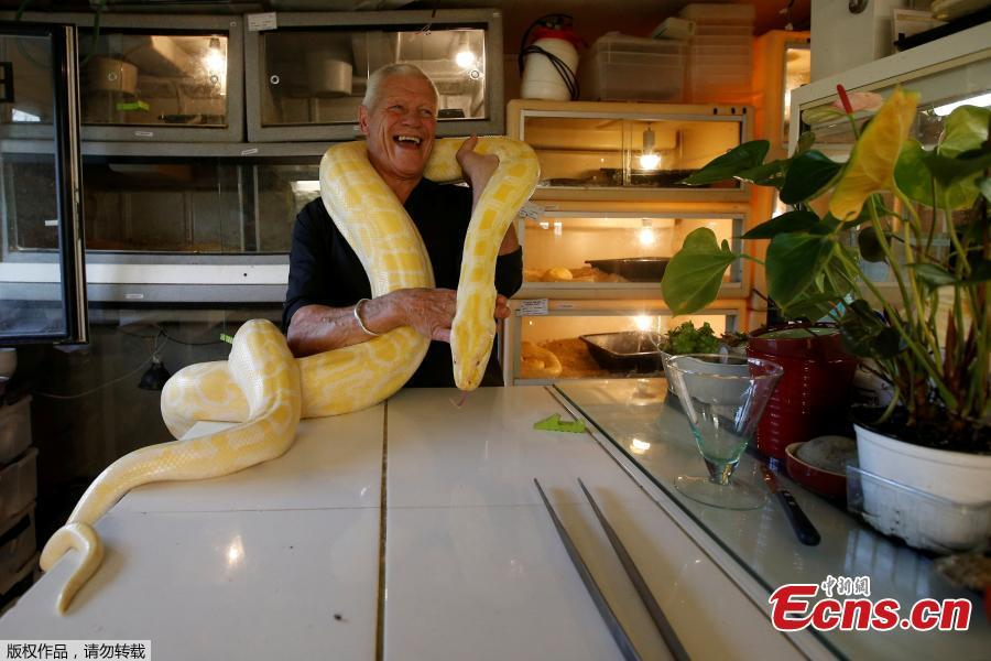 Philippe Gillet, 67 year-old Frenchman who lives with more than 400 reptiles and tamed alligators, poses with a python in his house in Coueron near Nantes, France, Sept. 19, 2018. (Photo/Agencies)