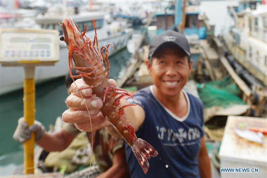 <?php echo strip_tags(addslashes(A fisherman shows the newly-caught shrimp at a dock of Qingdao, east China's Shandong Province, Sept. 18, 2018. (Xinhua/Wang Haibin))) ?>