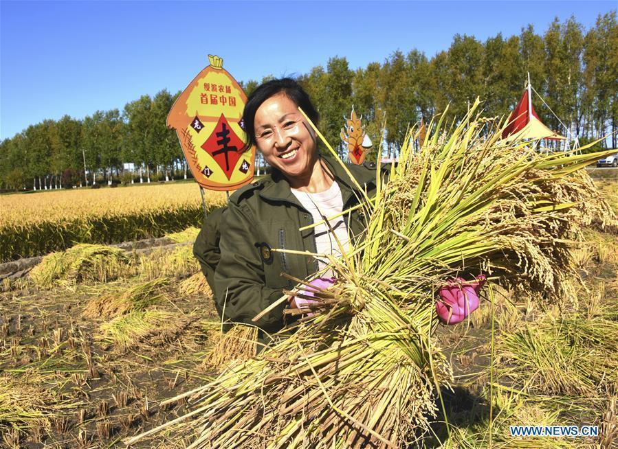 A worker holds the newly-harvested rice crops during a harvesting competition held by Suibin farm in Hegang, northeast China\'s Heilongjiang Province, Sept. 20, 2018. (Xinhua/Liu Hongjun)