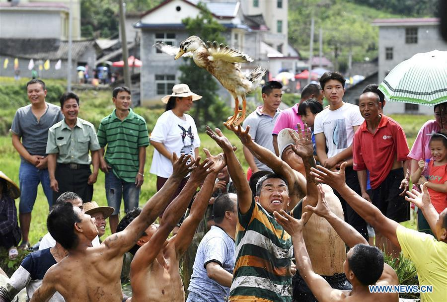 Local people catch a duck to celebrate harvest in Qinglong Village of Huayuan County, central China\'s Hunan Province, Sept. 20, 2018. (Xinhua/Long Enze)