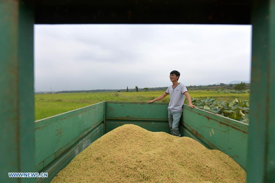 Zhou Biao takes a rest after rice harvest work in Liutian Village of Xinjian District in Nanchang, east China\'s Jiangxi Province, Sept. 21, 2018. When every harvest season for middle-season rice begins in September, Zhou Xiaolin, a rice grower, and his son Zhou Biao will always offer help to other farmers with the harvest, because few families nearby own multiple farm machineries that suffice the workload. Born in Liutian Village, Zhou Xiaolin used to be a carpenter away from home. In 2005, he returned home to take on rice growing. Two years later, Zhou Xiaolin and Zhou Biao expanded the scale of their rice growing by contracting to take over the village\'s uncultivated croplands. To meet the increasing production demand, Zhou bought the first farm machine in the village. Currently, Zhou Xiaolin and Zhou Biao have nearly 50 hectares of farmland under cultivation in the village. Altogether they own two combine harvesters, two rice transplanters and a tractor, which have made production even more efficient. An increasing number of rice growers nearby have started to use Zhou Xiaolin\'s machines and services for a reasonable price. \