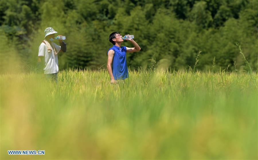 Zhou Biao (R) and a local farmer take a rest during rice harvest in Shengmi Township of Xinjian District in Nanchang, east China\'s Jiangxi Province, Sept. 20, 2018. When every harvest season for middle-season rice begins in September, Zhou Xiaolin, a rice grower, and his son Zhou Biao will always offer help to other farmers with the harvest, because few families nearby own multiple farm machineries that suffice the workload. Born in Liutian Village, Zhou Xiaolin used to be a carpenter away from home. In 2005, he returned home to take on rice growing. Two years later, Zhou Xiaolin and Zhou Biao expanded the scale of their rice growing by contracting to take over the village\'s uncultivated croplands. To meet the increasing production demand, Zhou bought the first farm machine in the village. Currently, Zhou Xiaolin and Zhou Biao have nearly 50 hectares of farmland under cultivation in the village. Altogether they own two combine harvesters, two rice transplanters and a tractor, which have made production even more efficient. An increasing number of rice growers nearby have started to use Zhou Xiaolin\'s machines and services for a reasonable price. \