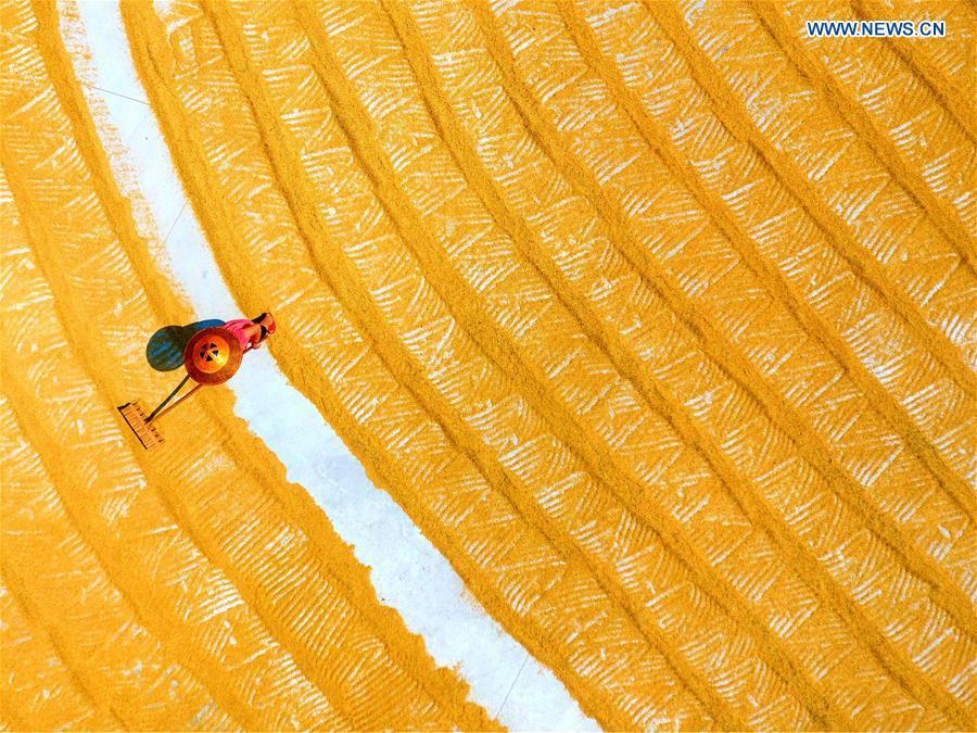 In this aerial photo taken on Sept. 22, 2018, a farmer rakes rice crops for air-drying in Sanshi Village of Jingzi Township in Shuangfeng County, central China\'s Hunan Province. China will mark its first Farmers\' Harvest Festival on Sept. 23 this year. From 2018 on, the festival, to be celebrated on the Autumnal Equinox each year, is set to be observed annually to greet the harvest season and honour the agricultural workers. (Xinhua/Li Jianxin)