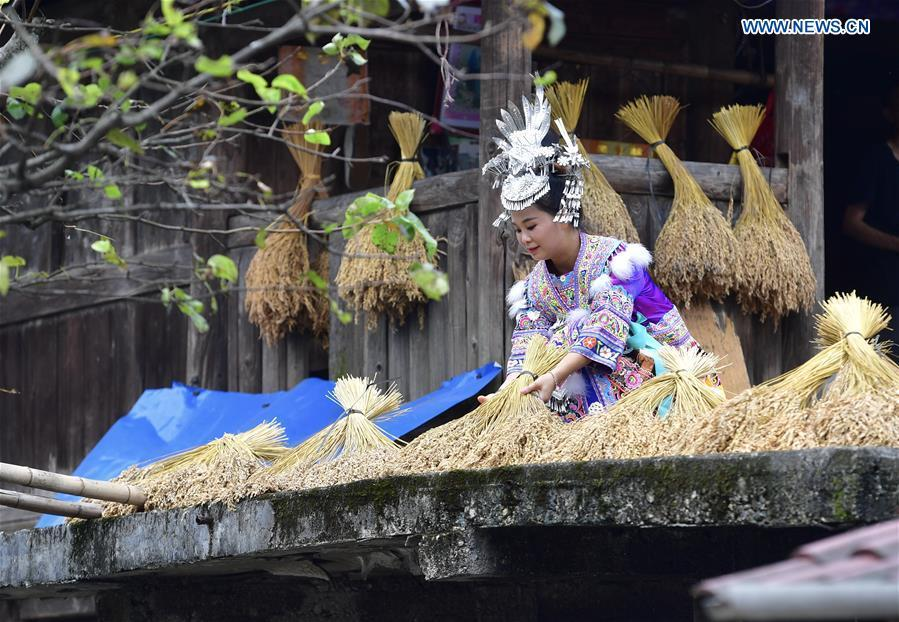 A woman from the Miao ethnic group prepares crops for a harvest-praying ceremony in Wuji Village of Anchui Township in Rongshui Miao Autonomous County, south China\'s Guangxi Zhuang Autonomous Region, Sept. 22, 2018. China will mark its first Farmers\' Harvest Festival on Sept. 23 this year. From 2018 on, the festival, to be celebrated on the Autumnal Equinox each year, is set to be observed annually to greet the harvest season and honour the agricultural workers. (Xinhua/Huang Xiaobang)
