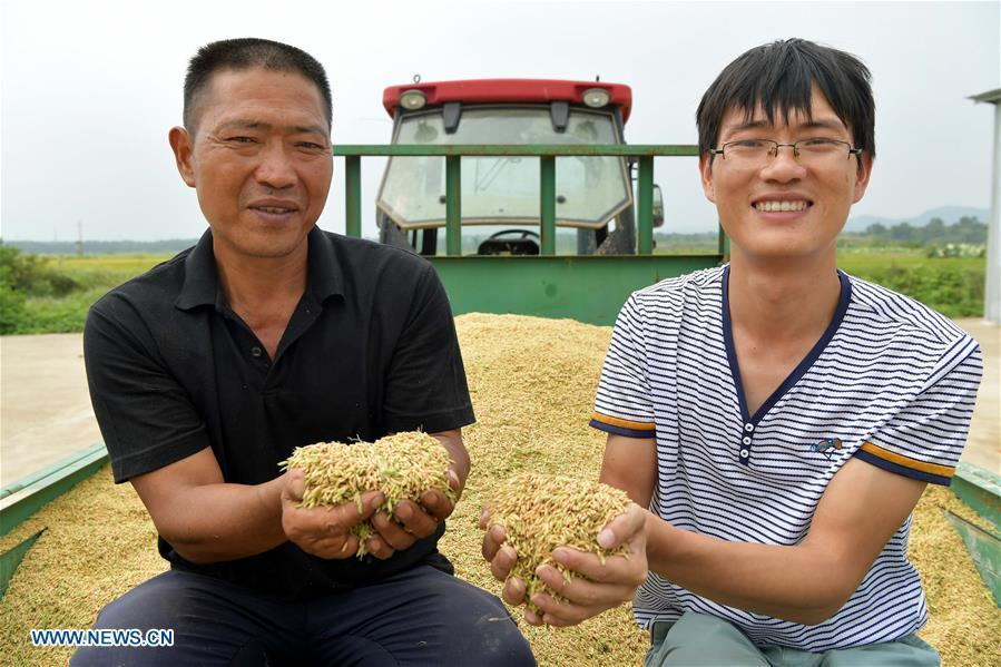Zhou Xiaolin (L) and Zhou Biao shows harvested middle-season rice in Liutian Village of Xinjian District in Nanchang, east China\'s Jiangxi Province, Sept. 21, 2018. When every harvest season for middle-season rice begins in September, Zhou Xiaolin, a rice grower, and his son Zhou Biao will always offer help to other farmers with the harvest, because few families nearby own multiple farm machineries that suffice the workload. Born in Liutian Village, Zhou Xiaolin used to be a carpenter away from home. In 2005, he returned home to take on rice growing. Two years later, Zhou Xiaolin and Zhou Biao expanded the scale of their rice growing by contracting to take over the village\'s uncultivated croplands. To meet the increasing production demand, Zhou bought the first farm machine in the village. Currently, Zhou Xiaolin and Zhou Biao have nearly 50 hectares of farmland under cultivation in the village. Altogether they own two combine harvesters, two rice transplanters and a tractor, which have made production even more efficient. An increasing number of rice growers nearby have started to use Zhou Xiaolin\'s machines and services for a reasonable price. \