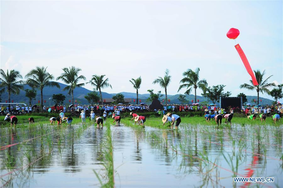 A rice transplanting contest is held at a national rice theme park in Sanya, south China\'s Hainan Province, Sept. 23, 2018. People across China hold various activities to celebrate the country\'s first Farmers\' Harvest Festival, which falls on Sept. 23 this year. (Xinhua/Sha Xiaofeng)