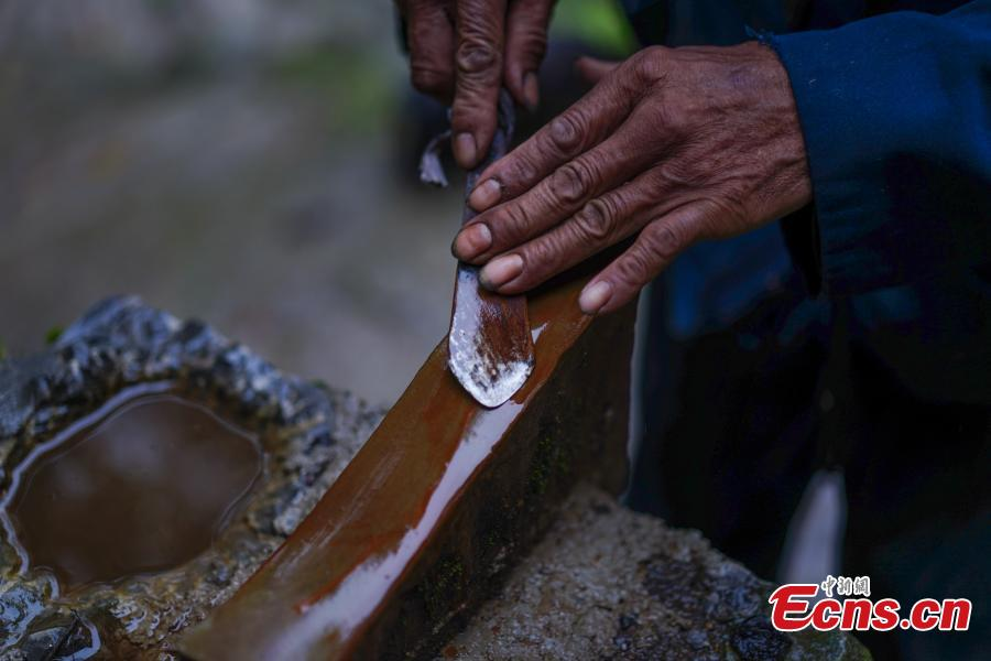 Hu Wenun, 58, sharpens a knife to be used to cut open a tree and take sap, which is used to make a durable coating called lacquer, in Dafang County, Southwest China's Guizhou Province, Sept. 23, 2018. The period from early summer to late autumn each year is said to be the best time to reap lacquer in the mountainous county, which has seen a rapid increase in online sales of the product. (Photo: China News Service/He Junyi)