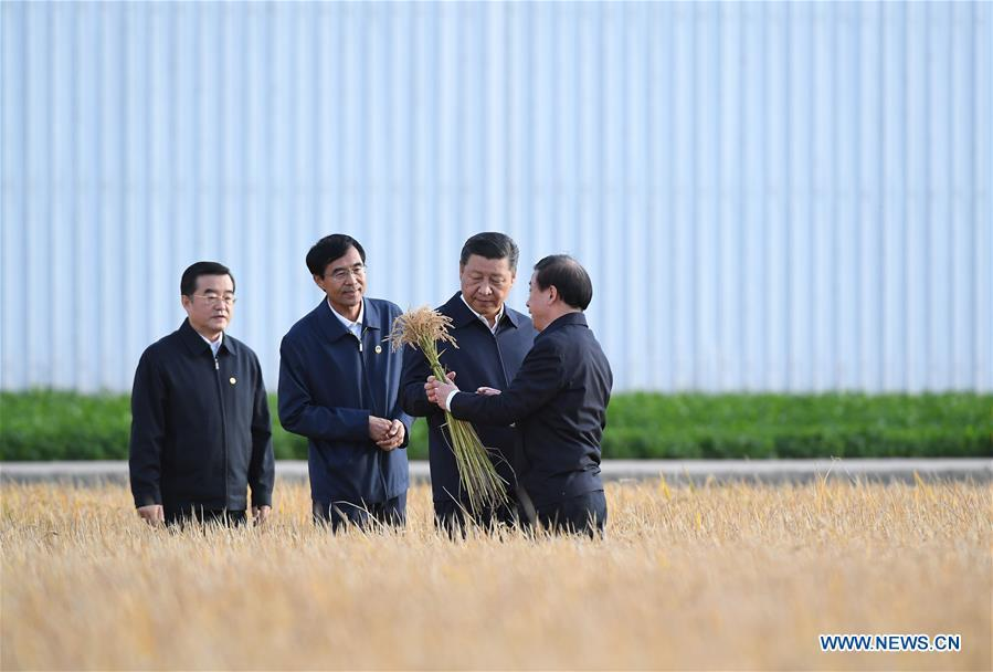 Chinese President Xi Jinping (2nd R), also general secretary of the Communist Party of China (CPC) Central Committee and chairman of the Central Military Commission, visits the farms and land reclamation administrative bureau of Jiansanjiang, northeast China\'s Heilongjiang Province, Sept. 25, 2018. Xi started an inspection tour in Heilongjiang on Tuesday. (Xinhua/Yan Yan)