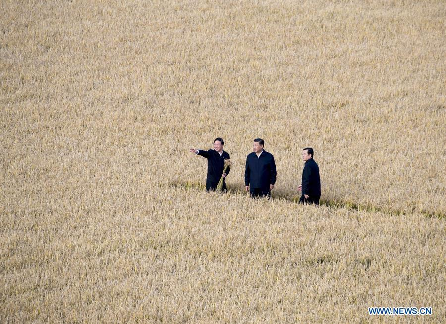 Chinese President Xi Jinping (C), also general secretary of the Communist Party of China (CPC) Central Committee and chairman of the Central Military Commission, visits the farms and land reclamation administrative bureau of Jiansanjiang, northeast China\'s Heilongjiang Province, Sept. 25, 2018. Xi started an inspection tour in Heilongjiang on Tuesday. (Xinhua/Wang Ye)