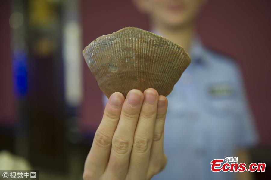 Photo taken on Sept. 26, 2018 shows a Guangzhou Customs press conference to announce a major success in busting the smuggling of endangered animals and plants, the largest case in the city. From July to August, Guangzhou Customs seized 7.26 tons of pangolin scales, which means about 120,000 to 180,000 pangolins were slaughtered. The scales sold for 340 yuan ($49) per kilogram in Africa and 5,600 yuan per kilogram in China. (Photo/VCG)