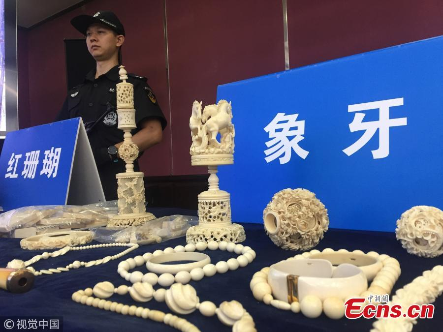 Ivory products are on display at a press conference by Guangzhou Customs. From July to August, Guangzhou Customs seized 7.26 tons of pangolin scales, which means about 120,000 to 180,000 pangolins were slaughtered. The scales sold for 340 yuan ($49) per kilogram in Africa and 5,600 yuan per kilogram in China. (Photo/VCG)