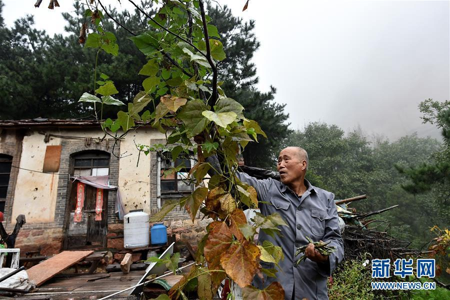 Zhao Naitang, 73, picks green beans to cook lunch for himself at the Huangyadong Martyrs Cemetery in Licheng County, North China's Shanxi Province, Sept. 19, 2018. Huangyadong used to be an arsenal of the Eighth Route Army and a battlefield during the Chinese People\'s War of Resistance against Japanese Aggression. Zhao has been the custodian at the cemetery, where 44 martyrs were buried, since 1991. (Photo/Xinhua)