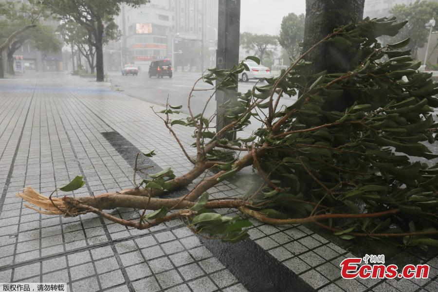 A picture taken in the city center of Naha, Okinawa prefecture, Sept. 29, 2018 shows a fallen branch as the island is the first part of Japan to face the typhoon Trami. (Photo/Agencies)