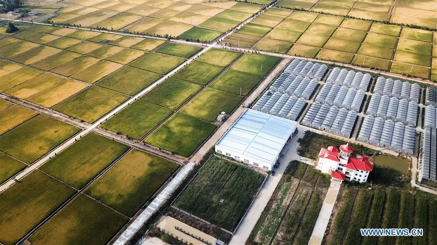 Aerial photo taken on Sept. 27, 2018 shows the modernized rice planting base of Beidahuang Group in Xiaogang Village of Fengyang County, east China\'s Anhui Province. Xiaogang, known as cradle of China\'s rural reform, witnessed great change in the past 40 years. (Xinhua/Zhang Duan)