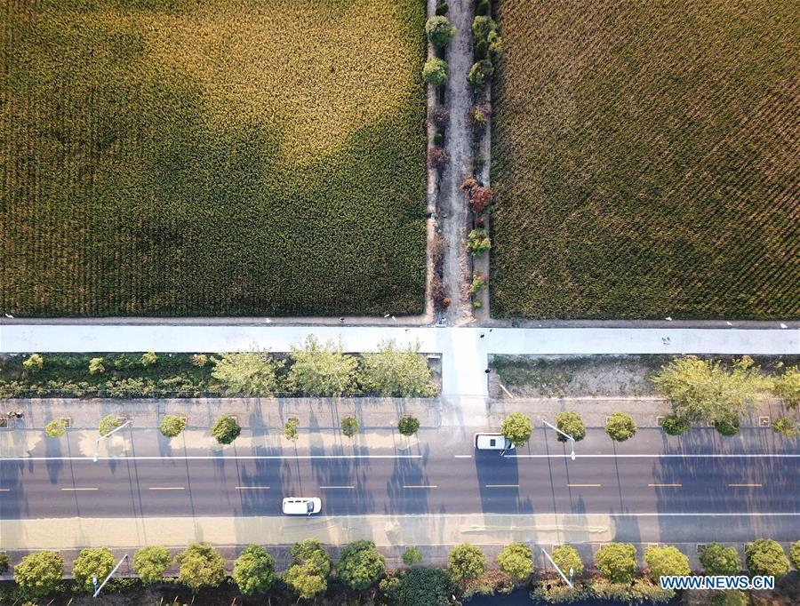 Aerial photo taken on Sept. 26, 2018 shows the rice fields and roads in Xiaogang Village of Fengyang County, east China\'s Anhui Province. Xiaogang, known as cradle of China\'s rural reform, witnessed great change in the past 40 years. (Xinhua/Liu Junxi)