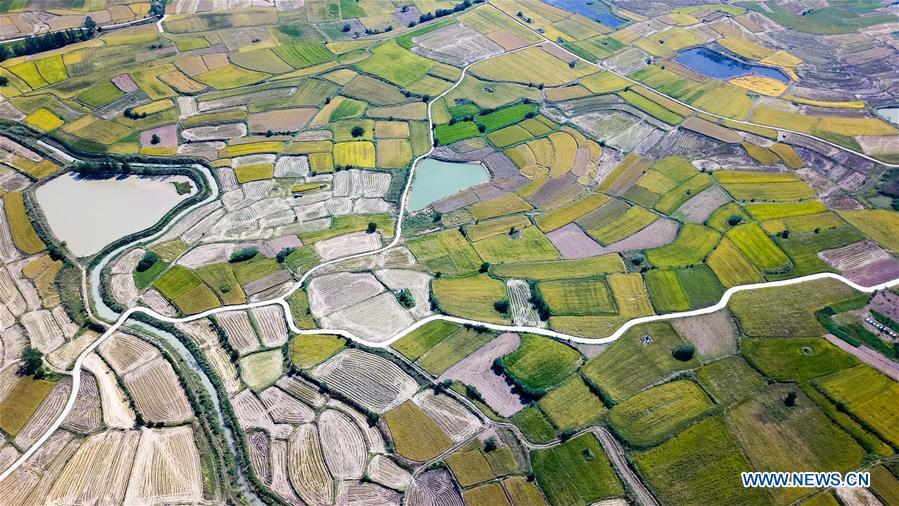 Aerial photo taken on Sept. 27, 2018 shows the rice fields of Xiaogang Village in Fengyang County, east China\'s Anhui Province. Xiaogang, known as cradle of China\'s rural reform, witnessed great change in the past 40 years. (Xinhua/Zhang Duan)