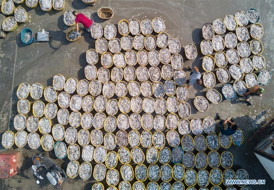 Fishermen arrange newly-caught fish at Xiangzhi fishing port in Shishi, southeast China\'s Fujian Province, Oct. 2, 2018. (Xinhua/Song Weiwei)