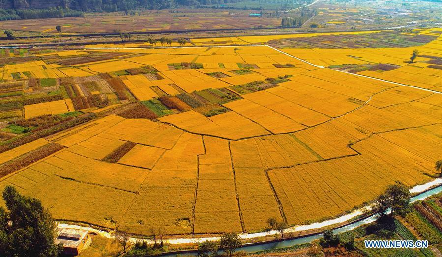 <?php echo strip_tags(addslashes(Aerial photo taken on Oct. 2, 2018 shows rice field in Shexian County of Handan, north China's Hebei Province. (Xinhua/Wang Xiao))) ?>