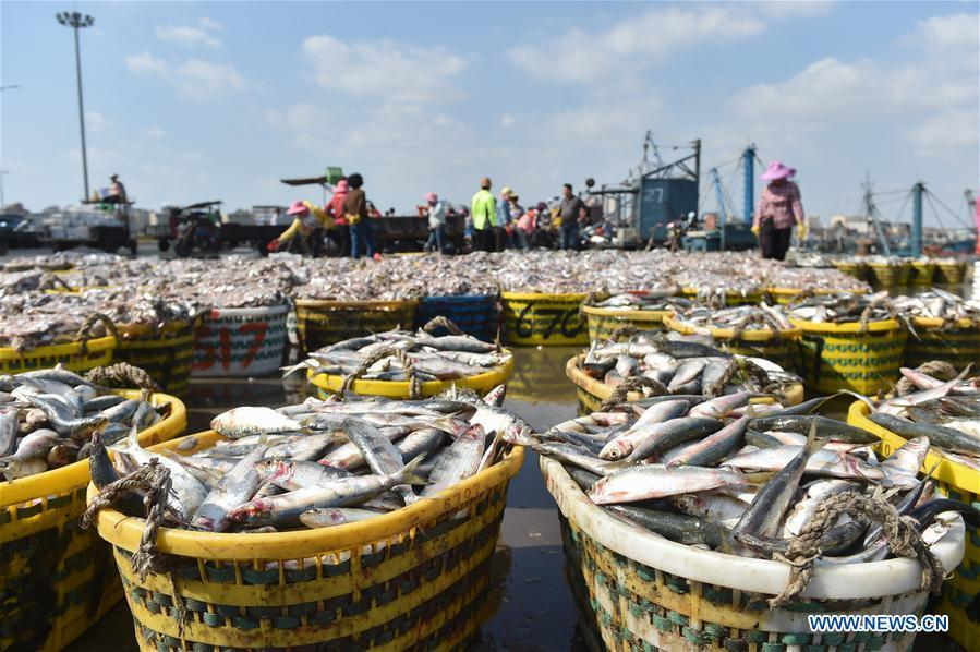 Photo taken on Oct. 2, 2018 shows newly-caught fish at Xiangzhi fishing port in Shishi, southeast China\'s Fujian Province. (Xinhua/Song Weiwei)